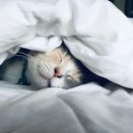 とにかく睡眠!